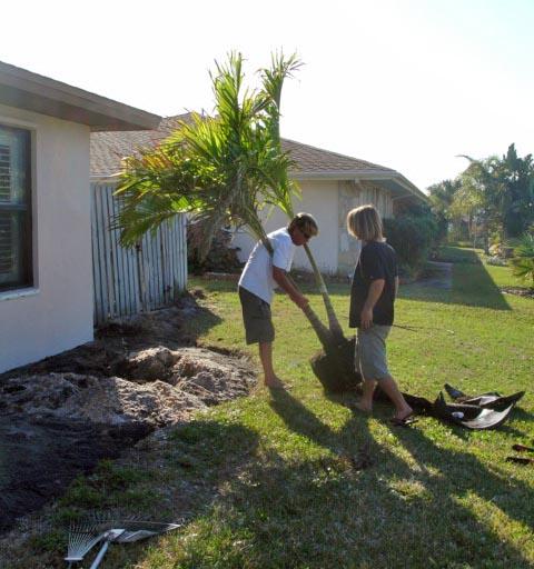 Feb Christmas Palm 2