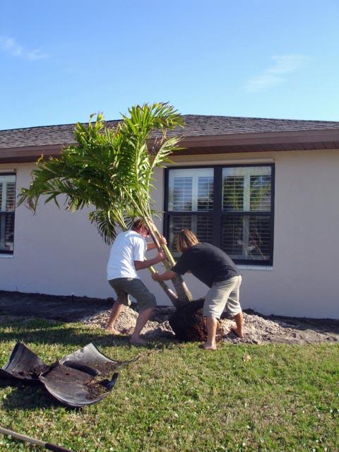 Feb Christmas Palm 3