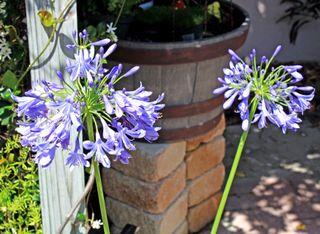 Purple Flowers April