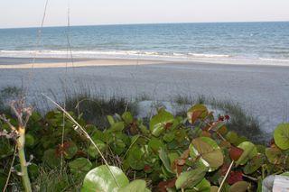 Grape Leaves Ocean April