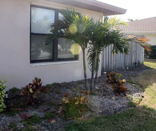 Dead Plants Palm January