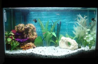 Fish_tank_oct_1