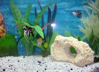 Fish_tank_s_and_a