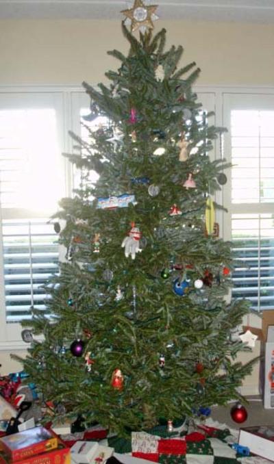 Tree_2007_front