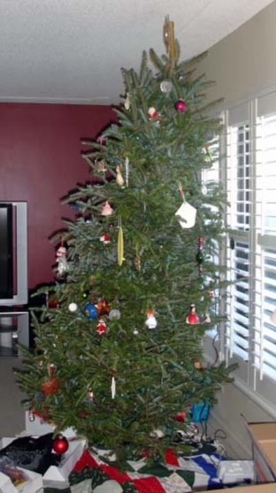 Tree_2007_side_lean