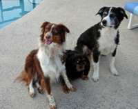 3_clean_dogs